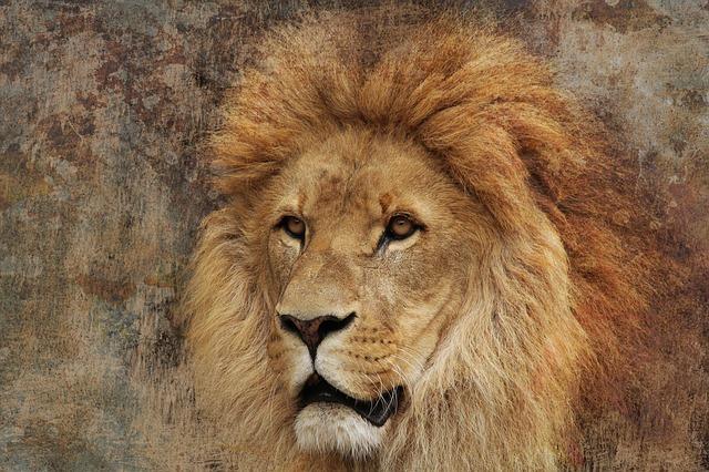 lion-592582_640